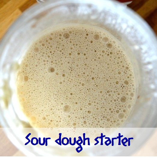 Sourdough Starter (wild yeast)